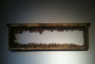 A framed rest of apiary by Daniela Manzolli