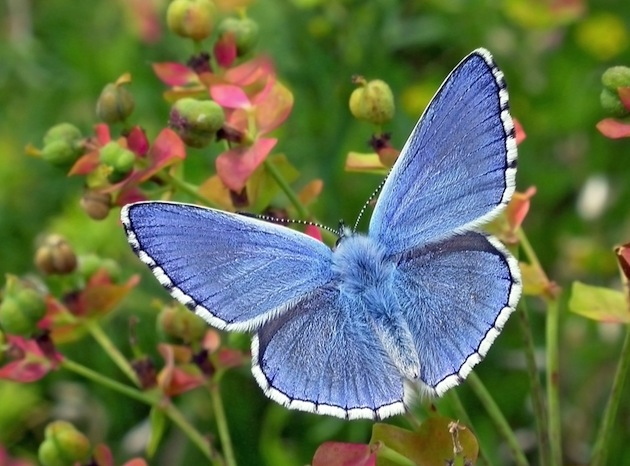 Un libro per conoscere le farfalle diurne dove vivono for Immagini farfalle per desktop