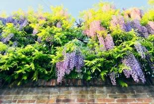 A Venetian garden (fenced), picture Diana Marrone